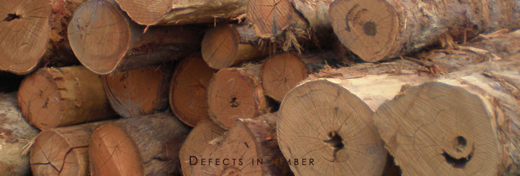 How to check the defects in Timber