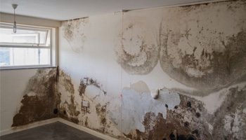 Effect of dampness on the walls