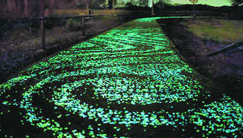 Light Emitting Cement - Green Pathway