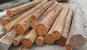 Timber - Poles Example