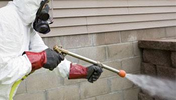 anti-termite treatment example