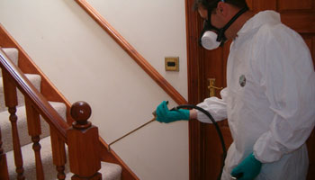 Termite treatment for wood related items